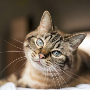 猫モチーフお菓子11選、日常から贈り物まで猫に囲まれる幸せ