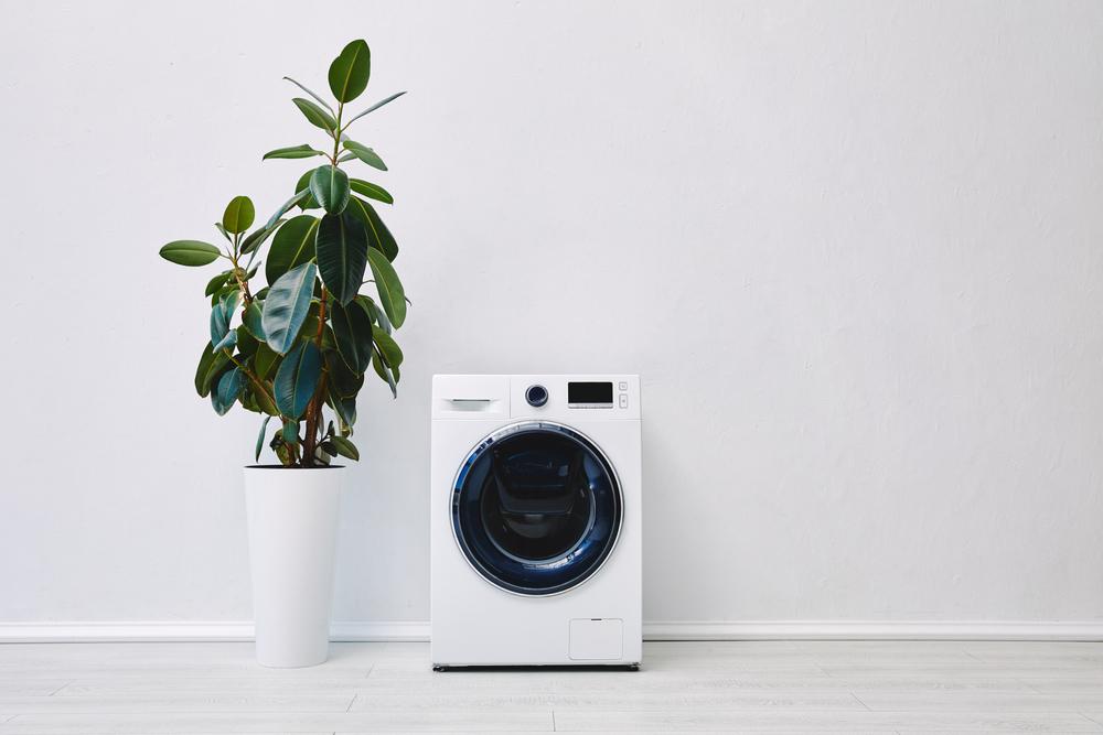 洗濯機と観葉植物