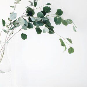 観葉植物で緑のインテリアをお部屋に。初心者でも育てやすい種類はどれ?