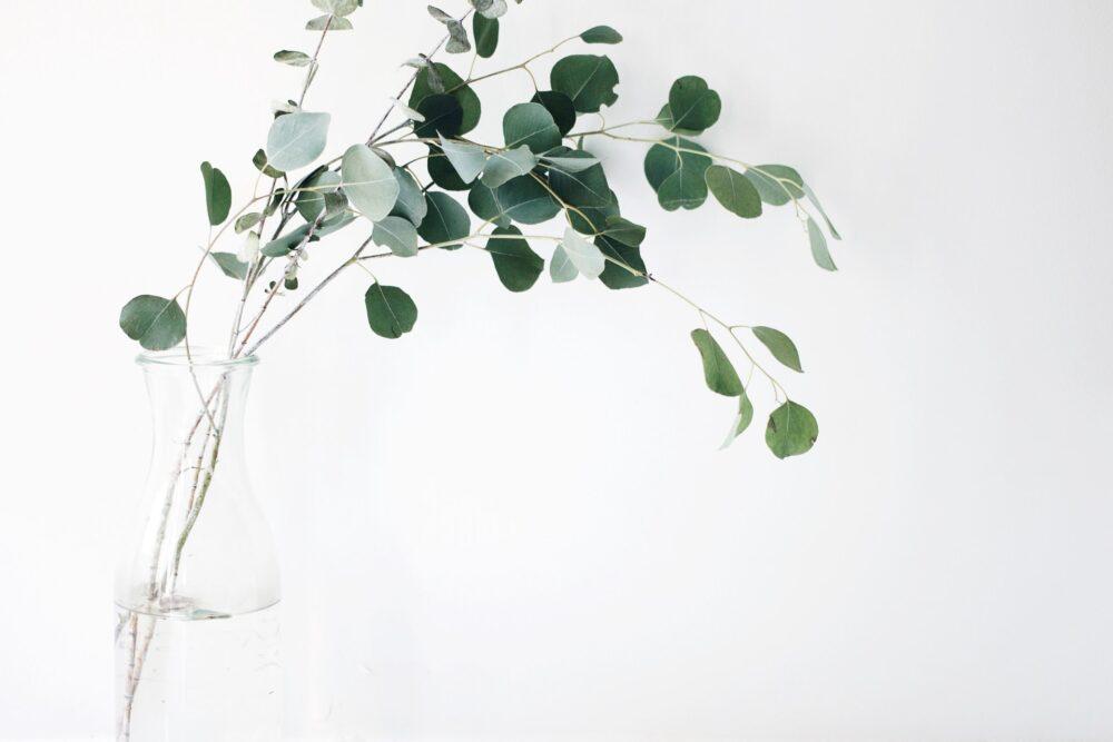 花瓶に入った観葉植物
