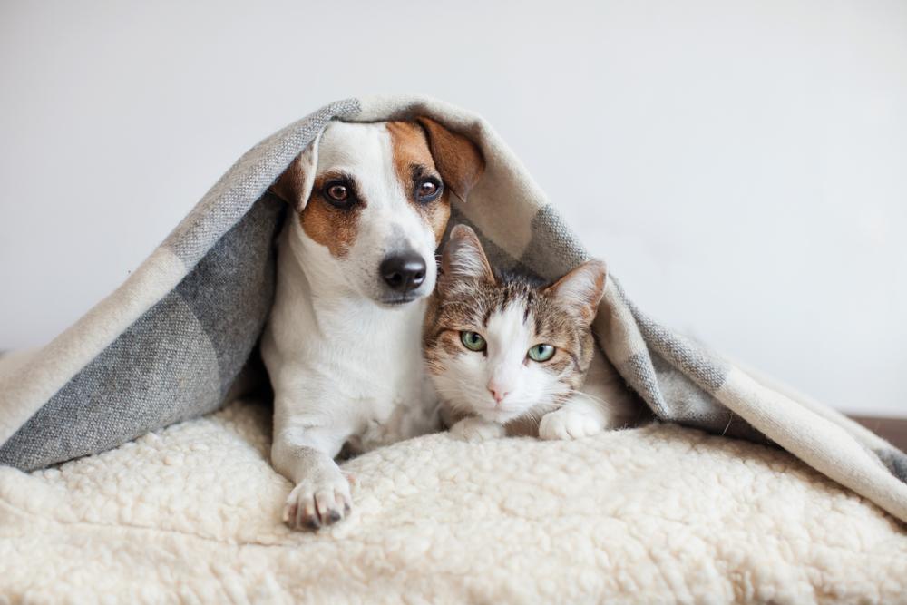 毛布をかぶった犬と猫
