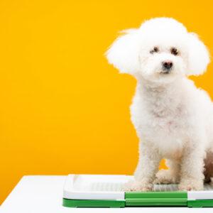 愛犬に最適なトイレはどれ?選ぶときのポイントや清潔に保つコツも紹介