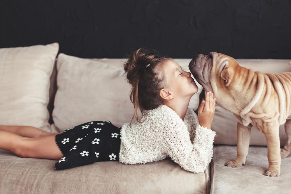 ブルドッグとソファでたわむれる女の子