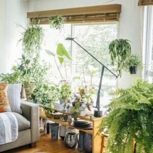 自宅時間が長い今だから♪観葉植物で住み心地向上プロジェクト