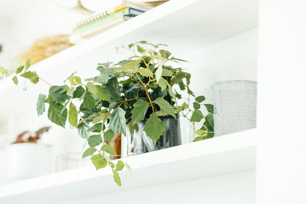 棚から垂れる観葉植物