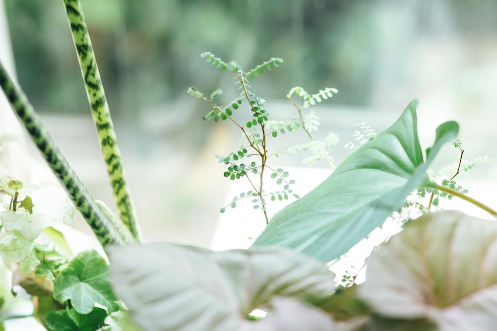 様々な種類の観葉植物