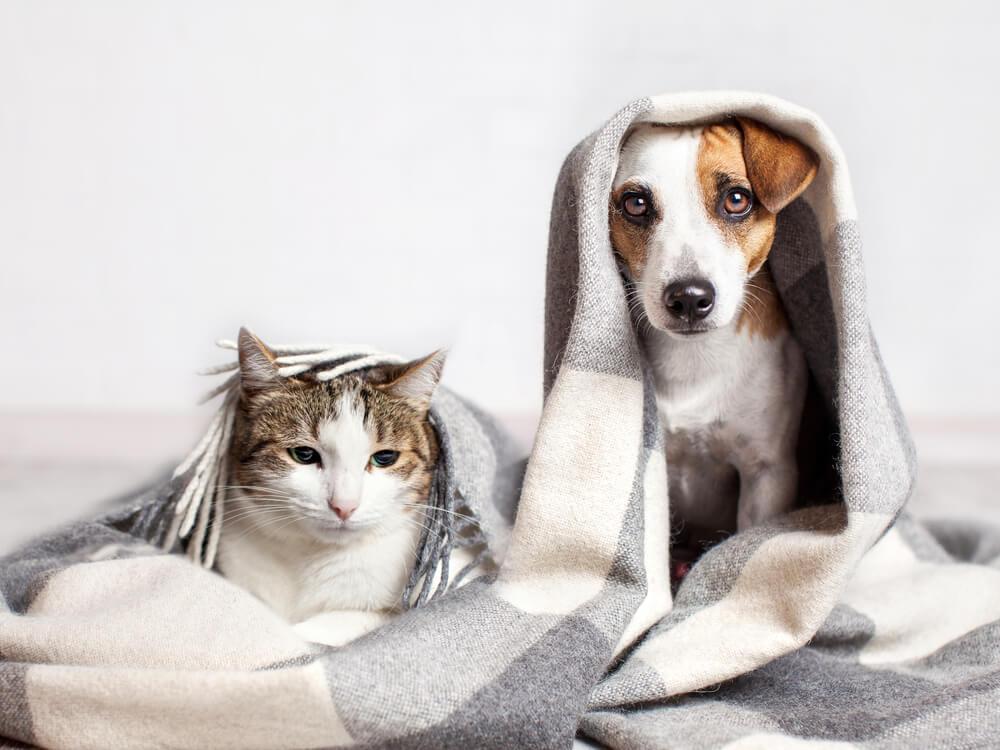 毛布にくるまる犬と猫