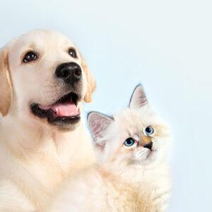 【犬・猫用】ペット用品のおすすめを紹介!増えてきたグッズの収納アイディアも