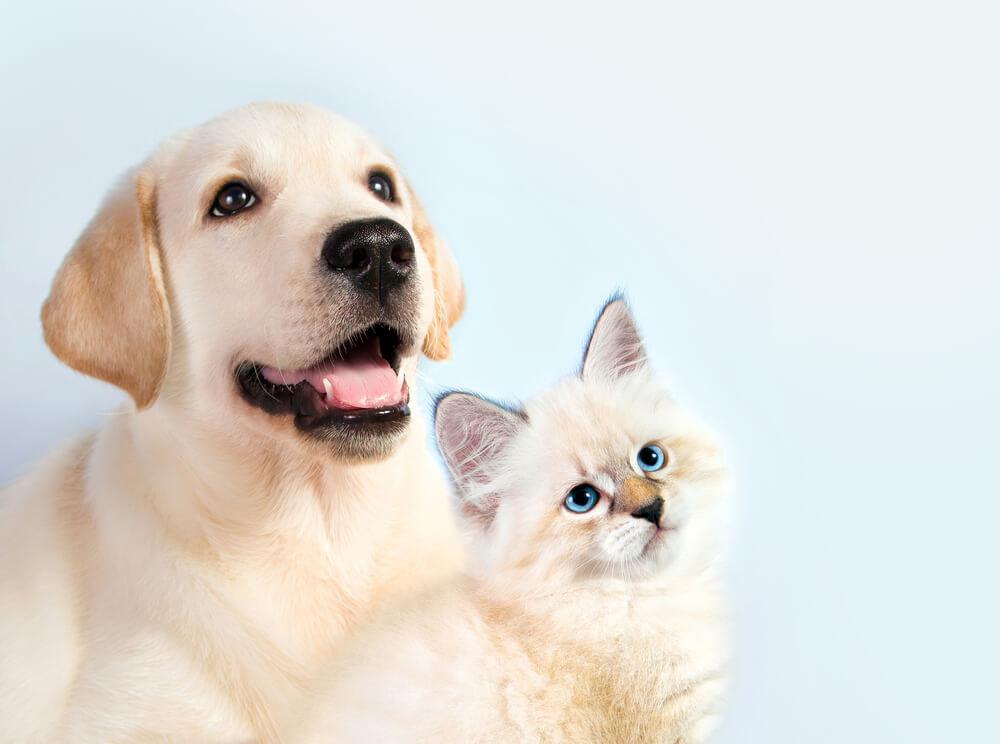 上を見る犬と猫