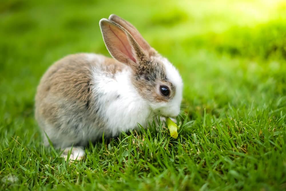 草の上でニンジンの葉を食べるうさぎ