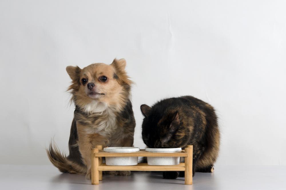 食器台の上にある餌を食べる犬と猫