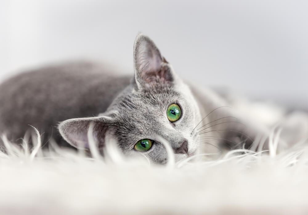 カーペットに寝転ぶ猫