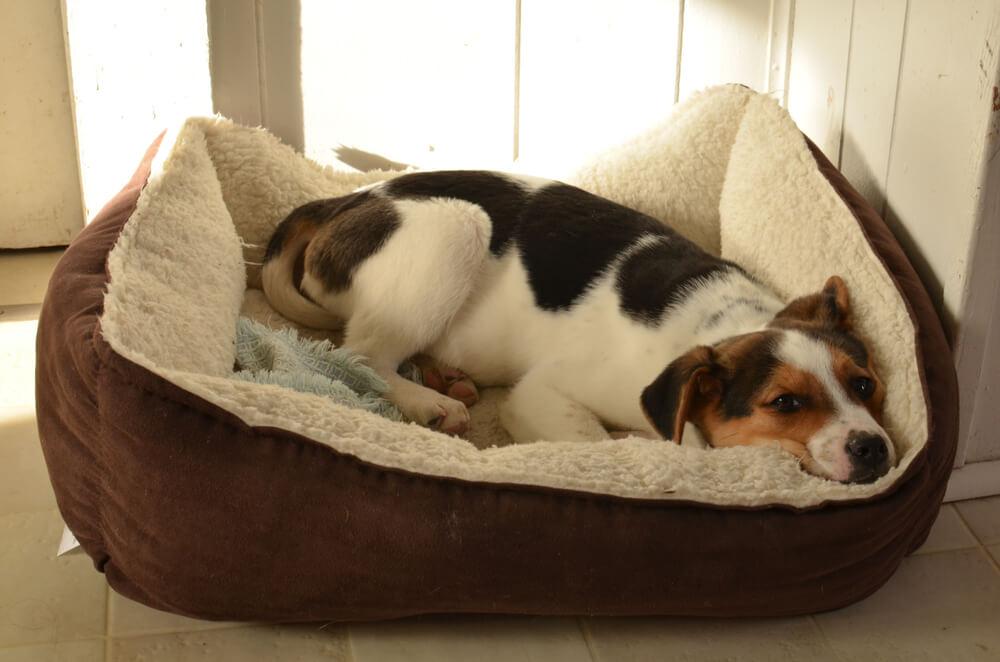 ペット用ベッドで寝そべる犬