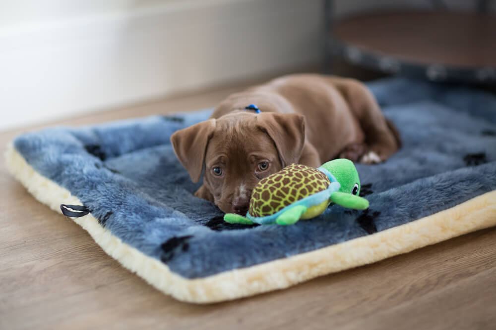 マットタイプのペット用ベッドに寝そべる犬