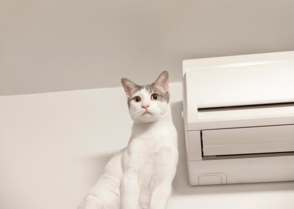 エアコンの傍に立つ猫