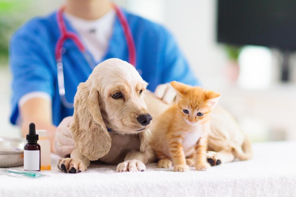獣医師に診察を受ける犬猫