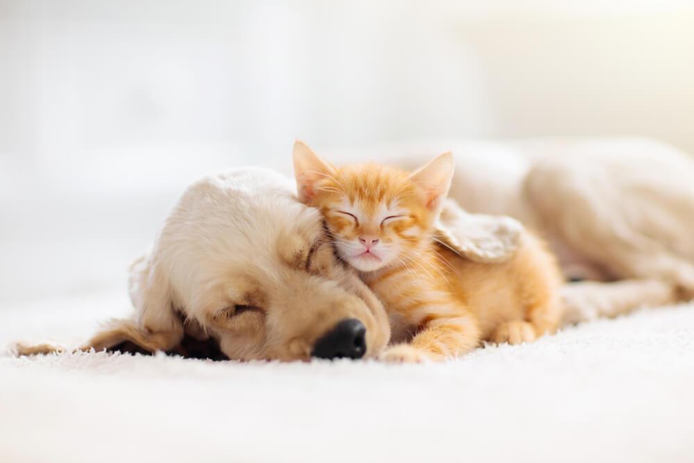 一緒に寝る犬と猫