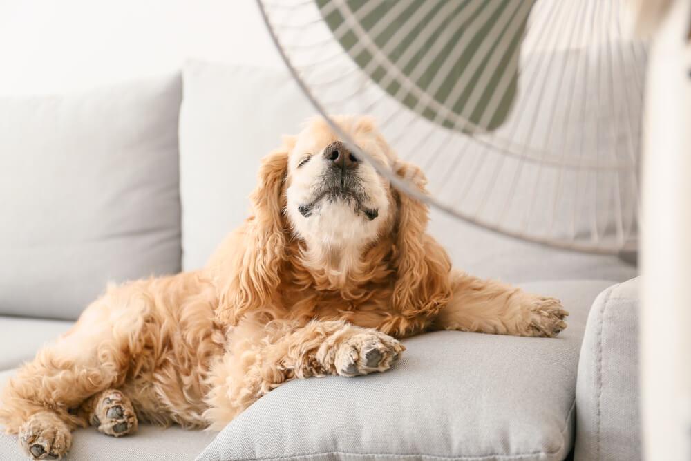 扇風機に当たって涼む犬