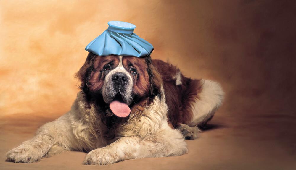 頭にアイスピックをのせる犬