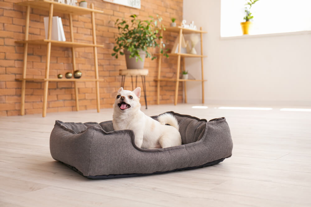 ペット用ベッドに座る犬