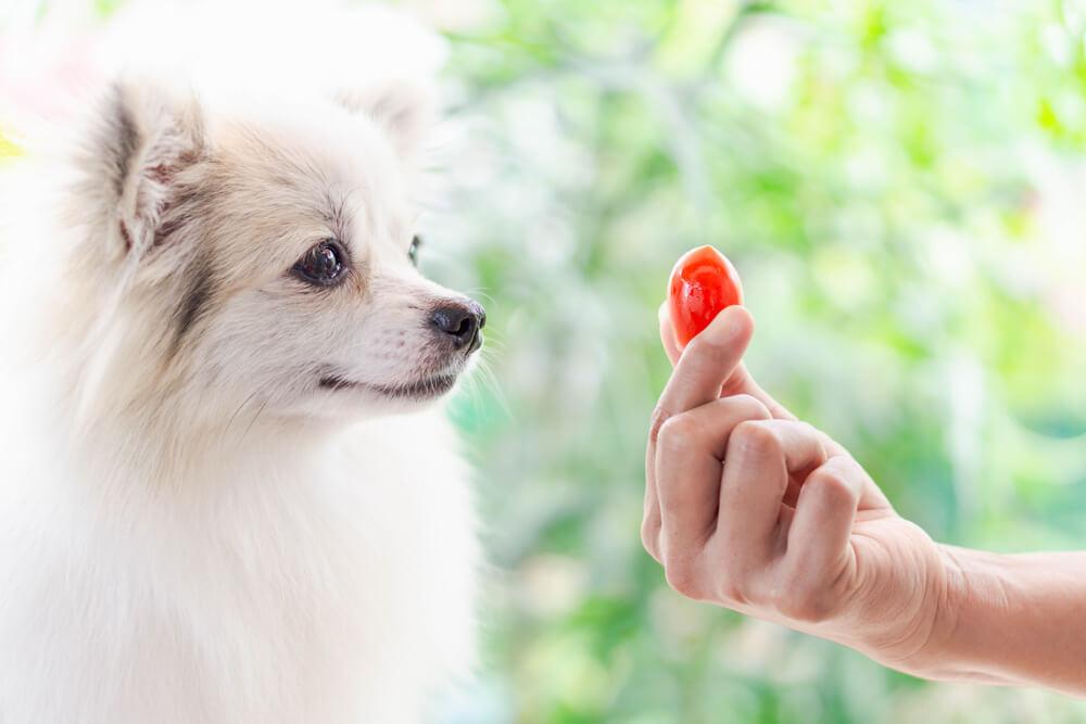 プチトマトを与えられる犬