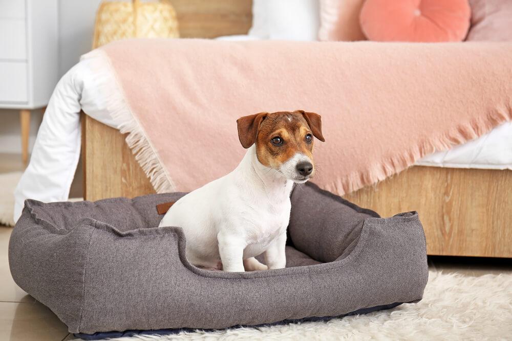 ペット用ベッドで座る犬
