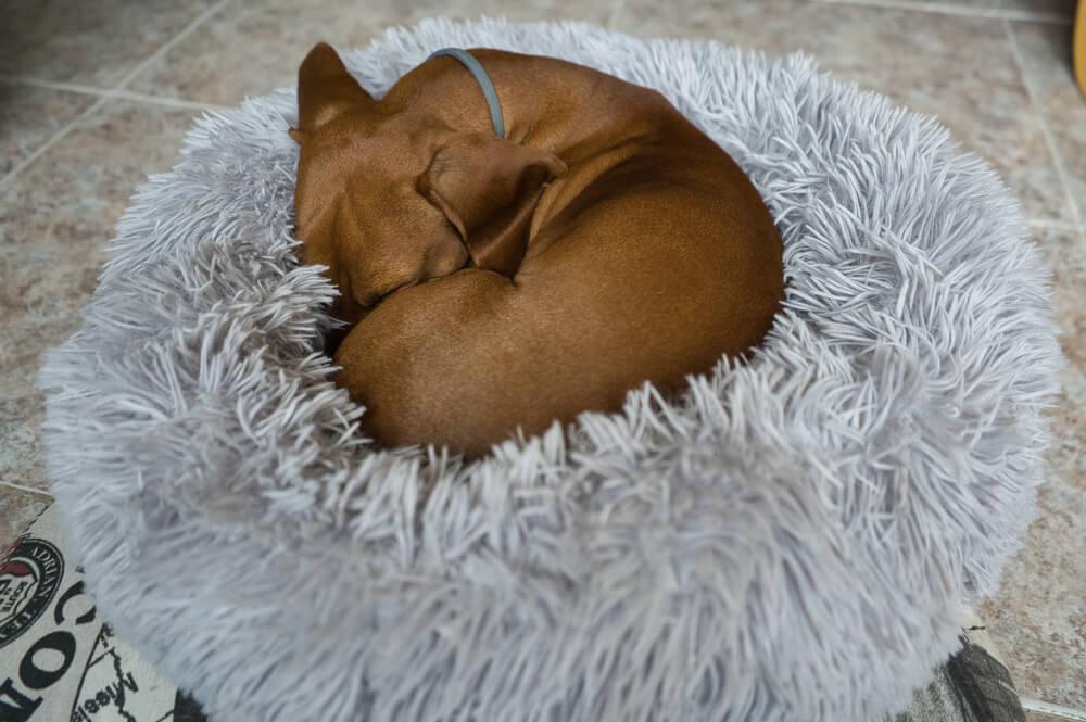 ファー素材のペット用ベッドで寝る犬