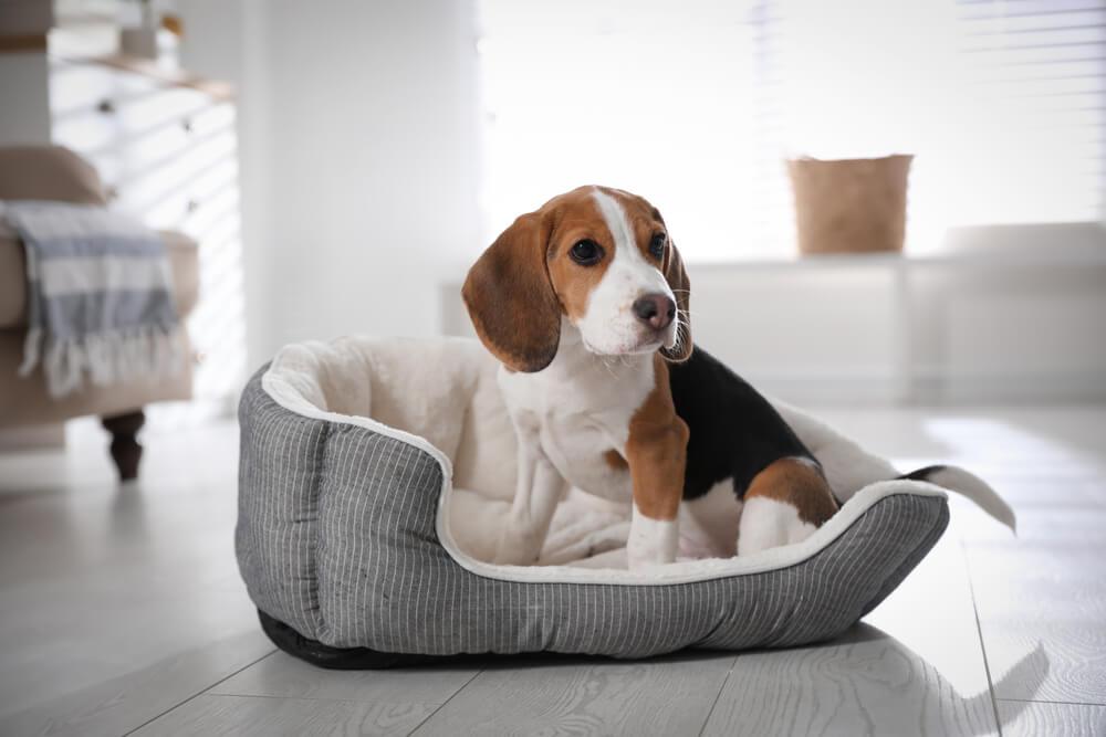 ペット用ベッドに座る子犬