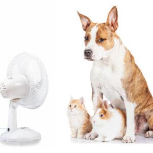 【ペット】犬・猫の暑さ対策を知っておこう!身近なものでできる対策とは
