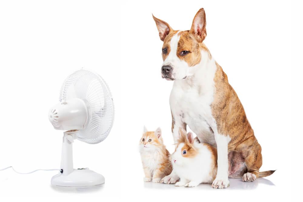 扇風機に当たる犬と猫とうさぎ