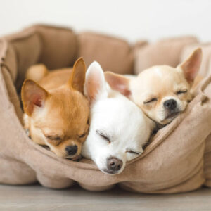 犬が快適に使えるペット用のベッドを紹介!選び方やお手入れ方法も知ろう