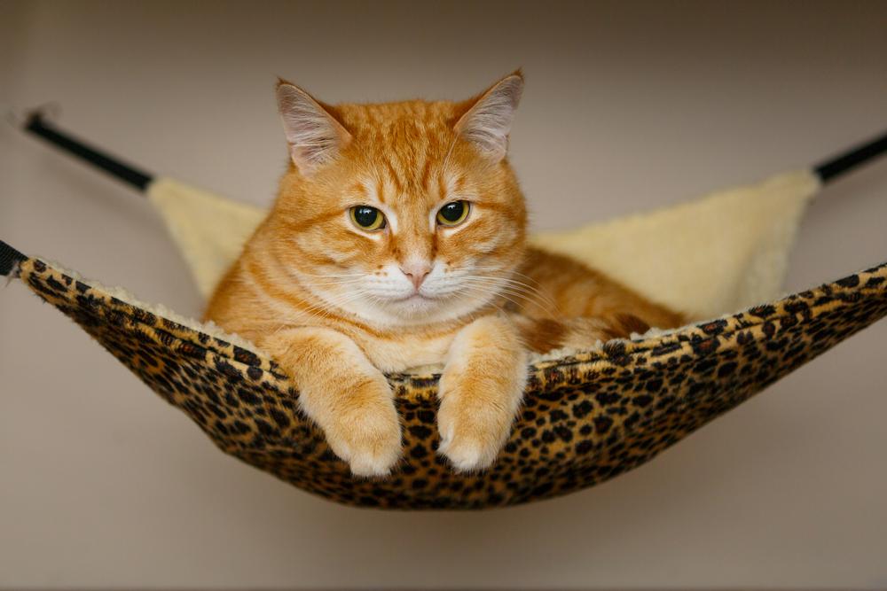 ヒョウ柄のハンモックでくつろぐ猫