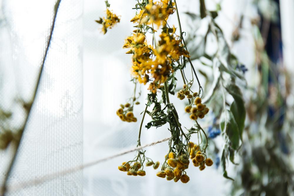 吊るされた黄色の花