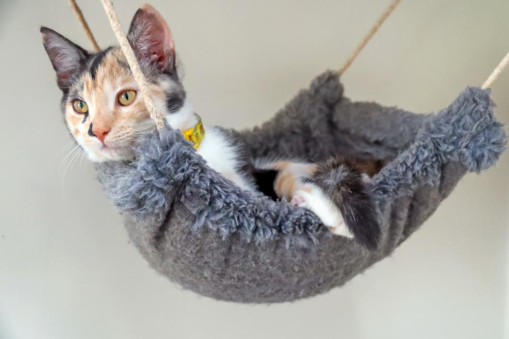毛布のハンモックでくつろぐ猫