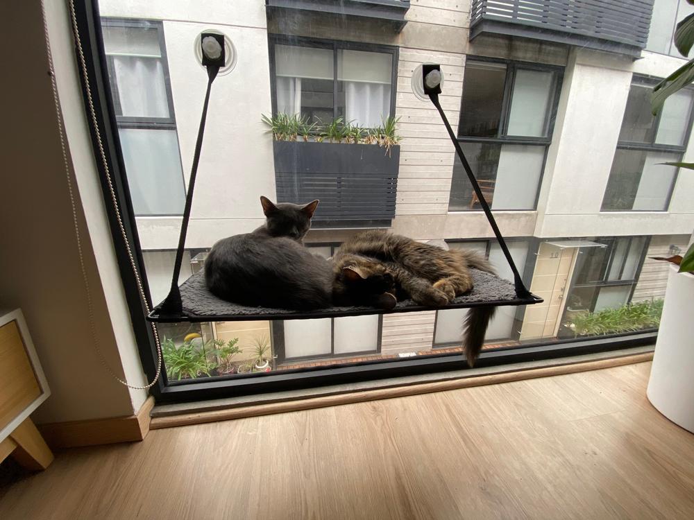 窓際の吸盤型ハンモックでくつろぐ猫