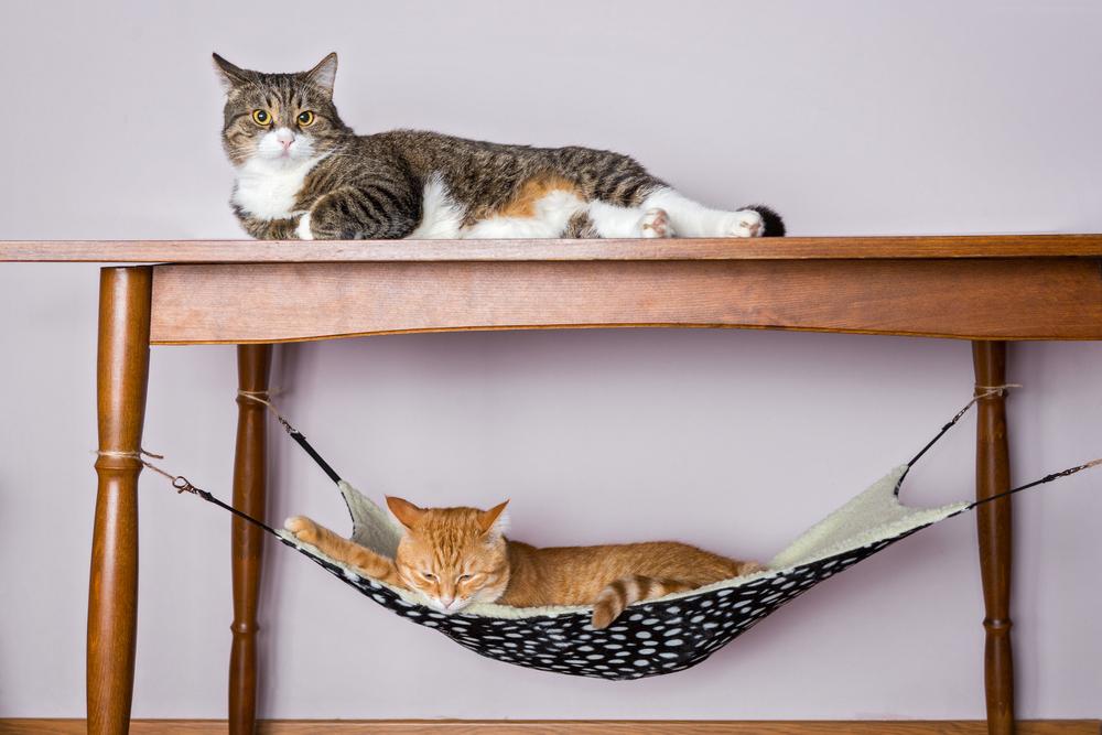テーブルの上と下のハンモックでくつろぐ猫