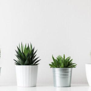 コロンと可愛いサボテンを植え替えよう♡初心者も簡単にできる方法を解説!