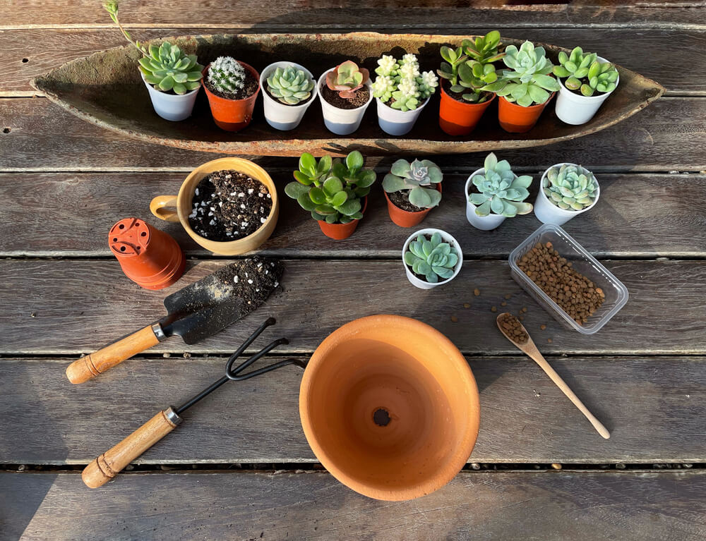 床の上に並べられたサボテンや植え替え道具