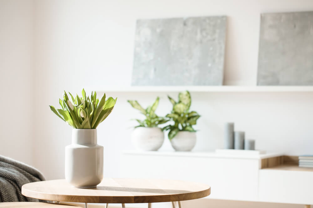 観葉植物が飾られた部屋