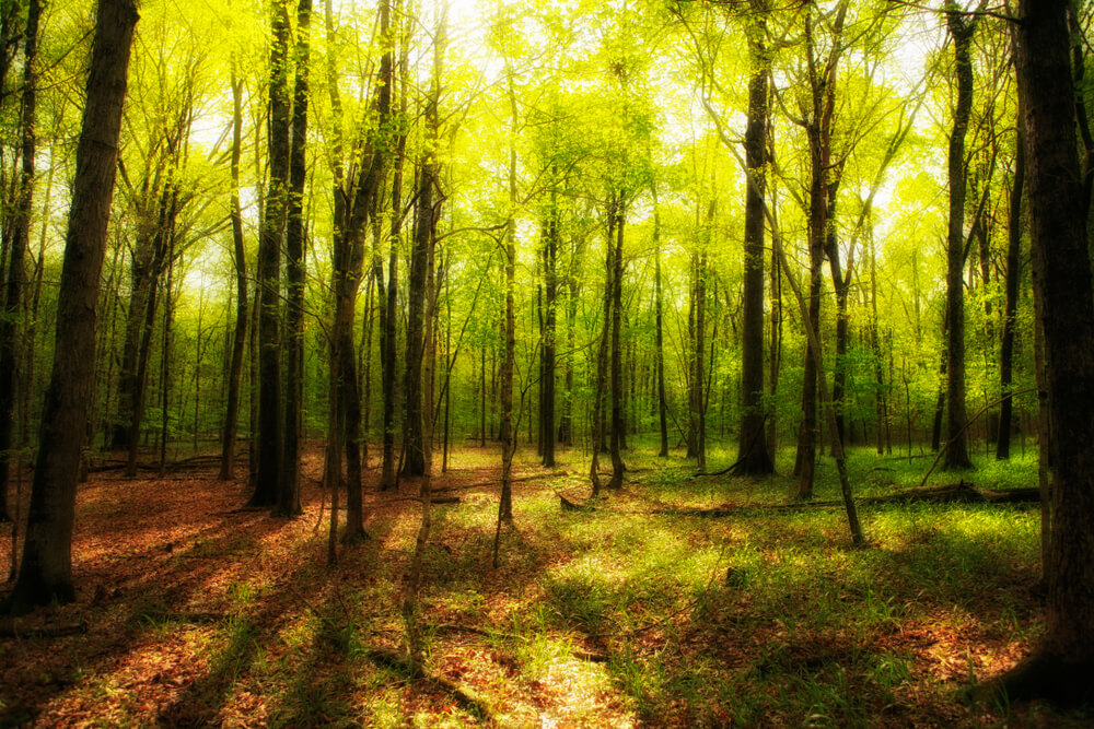 木漏れ日の風景