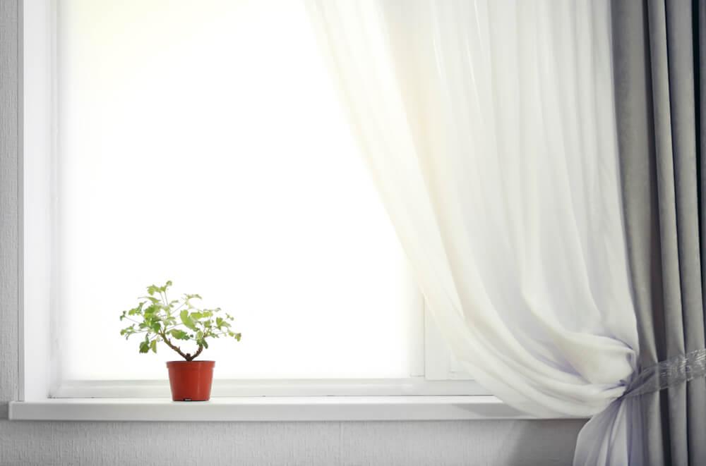 観葉植物が飾られた窓辺