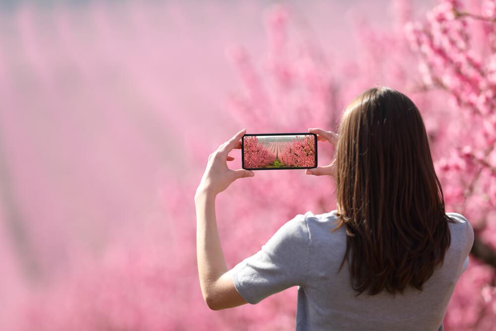 お花畑を撮影している女性