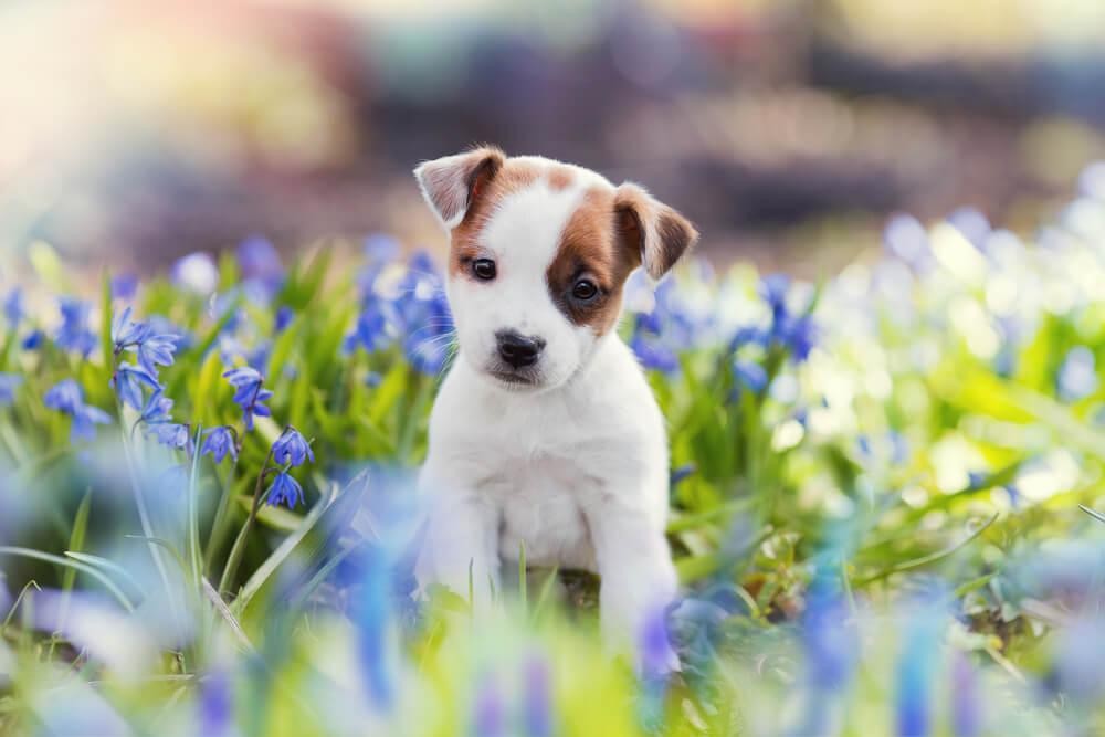 花畑に座る子犬